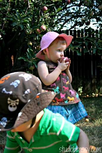 apples-szd
